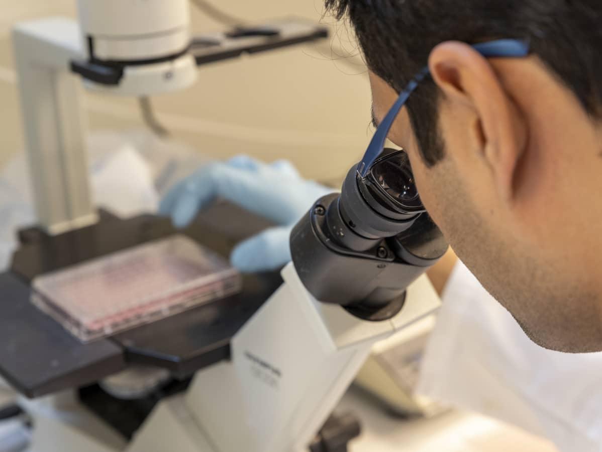 Mies tutkii mikroskoopilla näytettä Jyväskylän yliopiston bio- ja ympäristötieteiden laitoksen laboratoriossa.