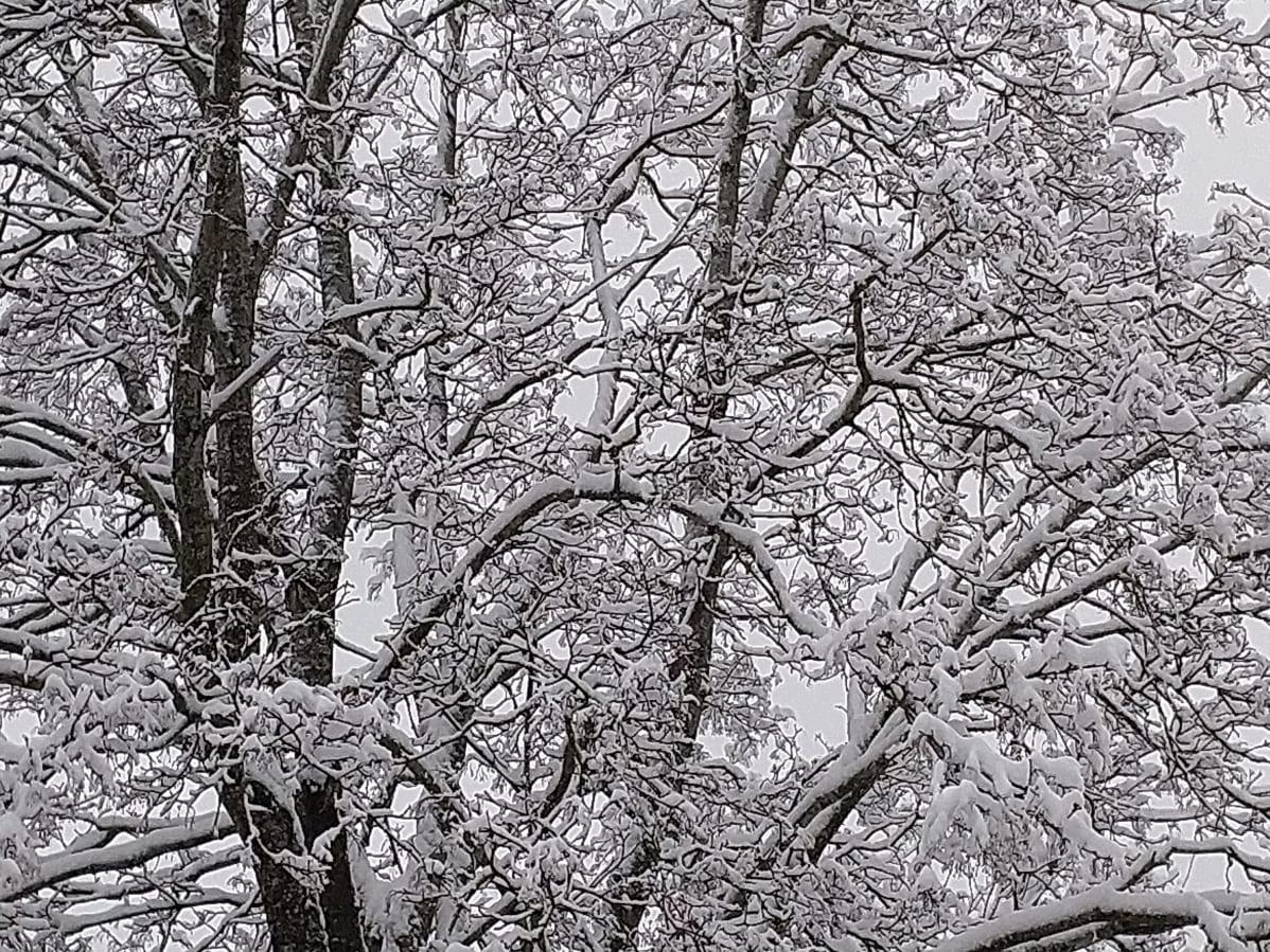 Lunta puissa.