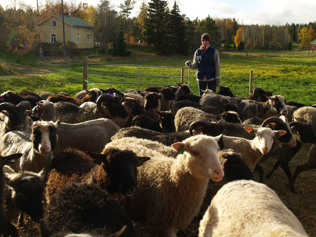 Katja Sikka ja lampaita