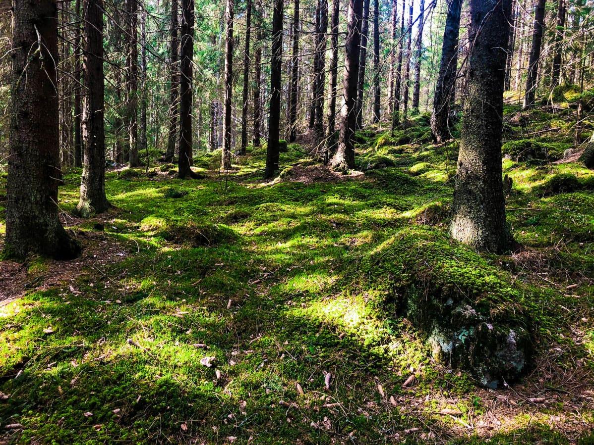 Grön mossbädd i skog.