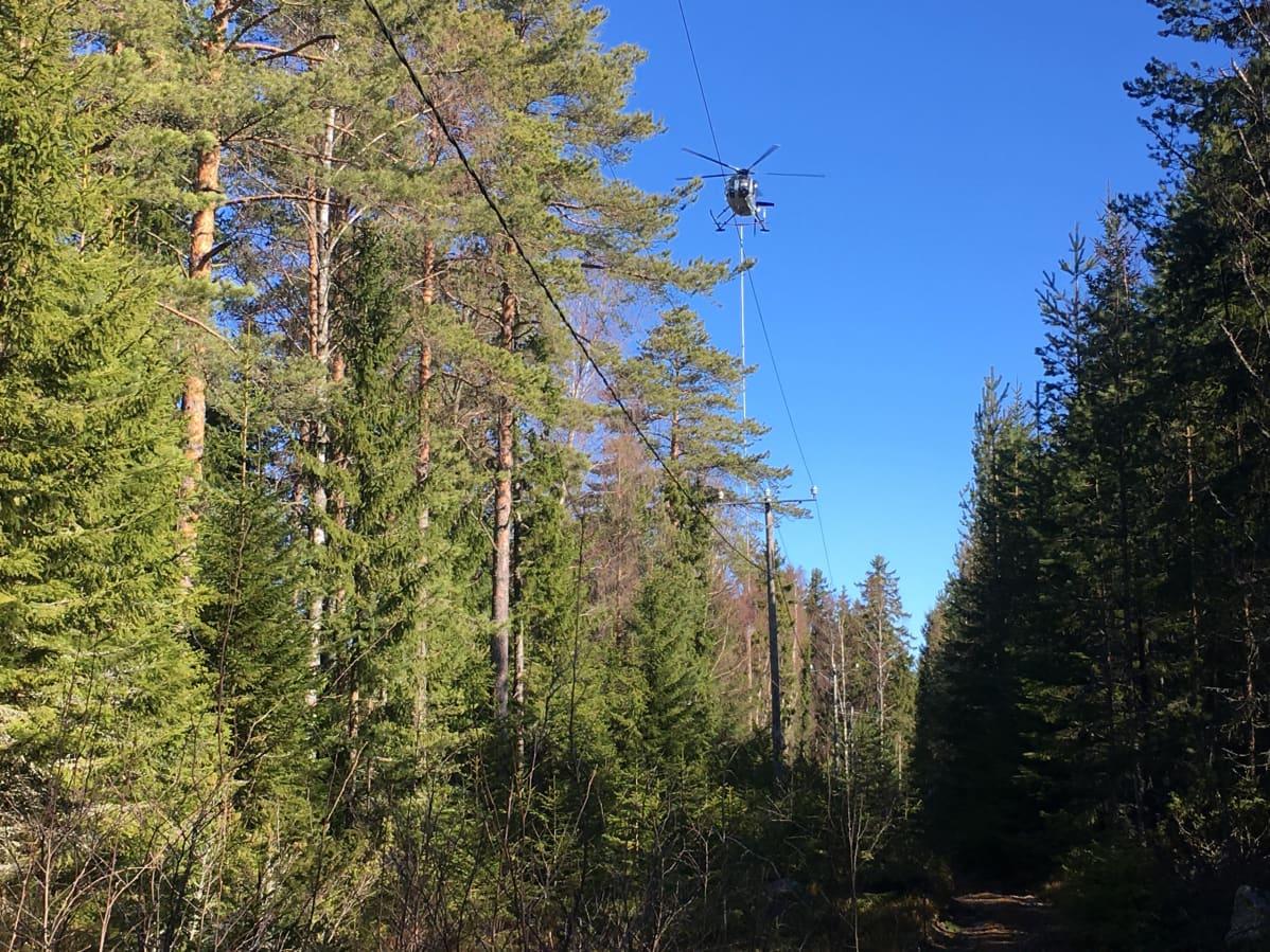 Helikopterilla raivataan puiden oksia.