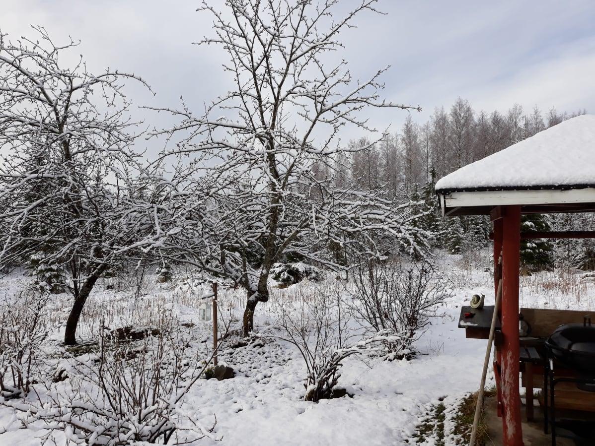 Lumisade yllätti Pohjois-Karjalan toukokuun puolivälissä.