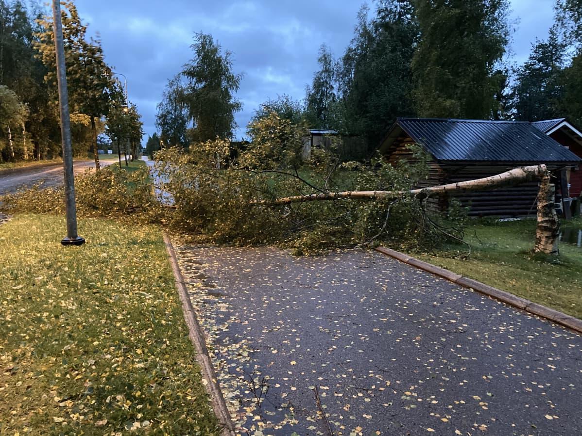 Aila-myrskyn kevyen liikenteen väylälle kaatama puu Kokkolassa.