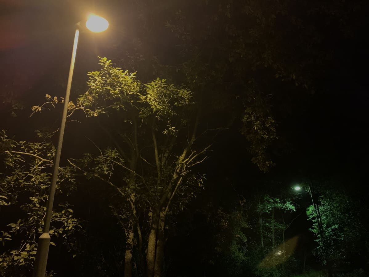 Suurpainenatrium- ja elohopeahöyrylamppu puiden katveessa.