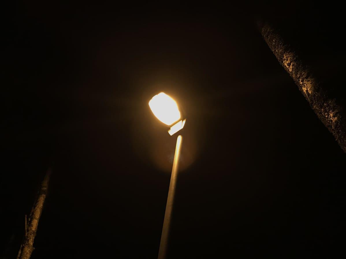 Suurpainenatriumkatuvalo hohkaa valoa puunrunkoa vasten.