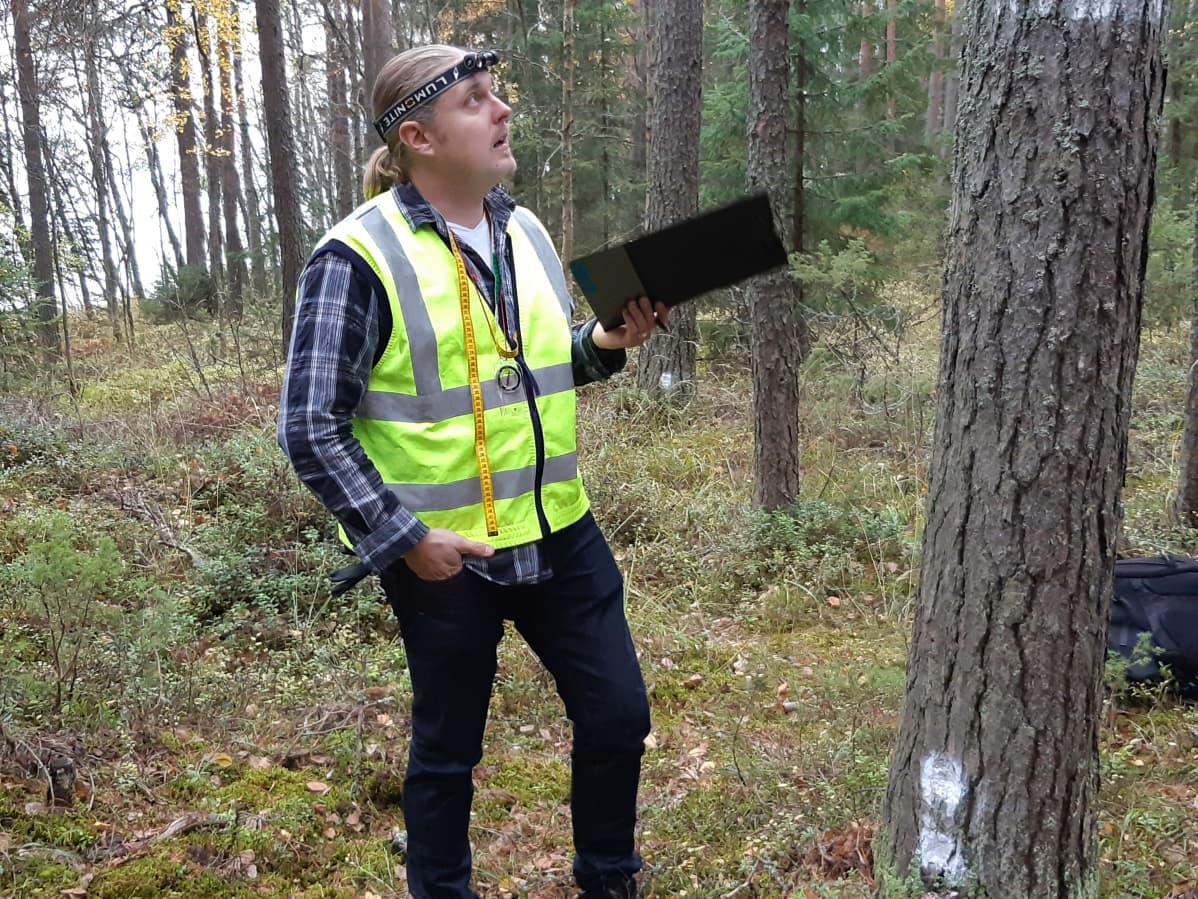 Projektipäällikkö Janne Ruuth tutkii männyn runkoa