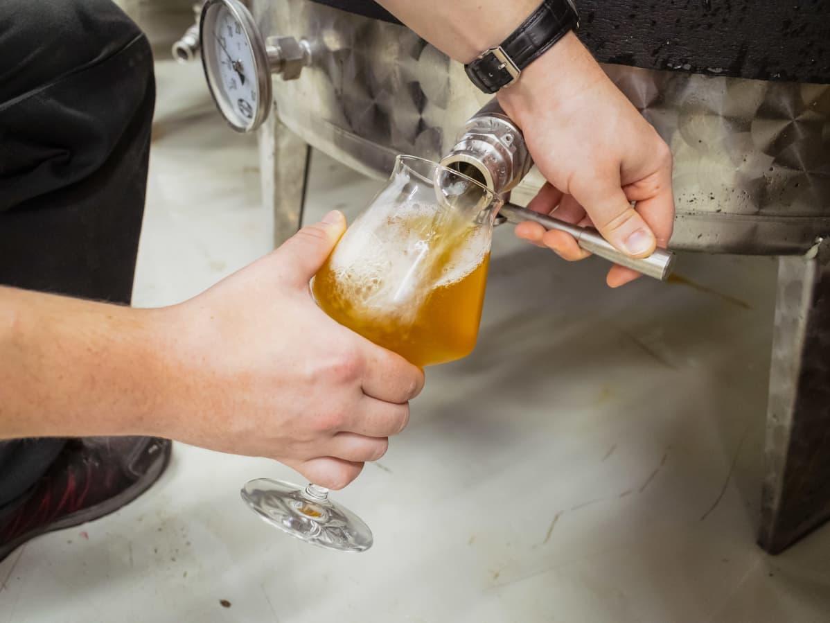 Olutta lasketaan lasiin käymistankista.