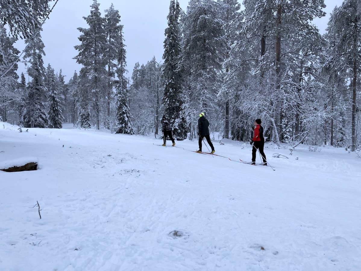 Matkailijat hiihtämässä Ylläksen kupeessa olevalla ladulla.