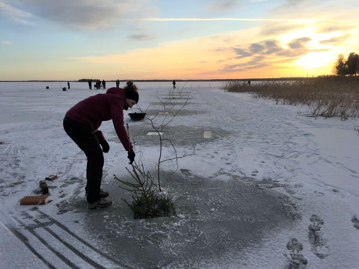 Nainen upottaa joulukuusen jäässä olevasta aukosta merellä.