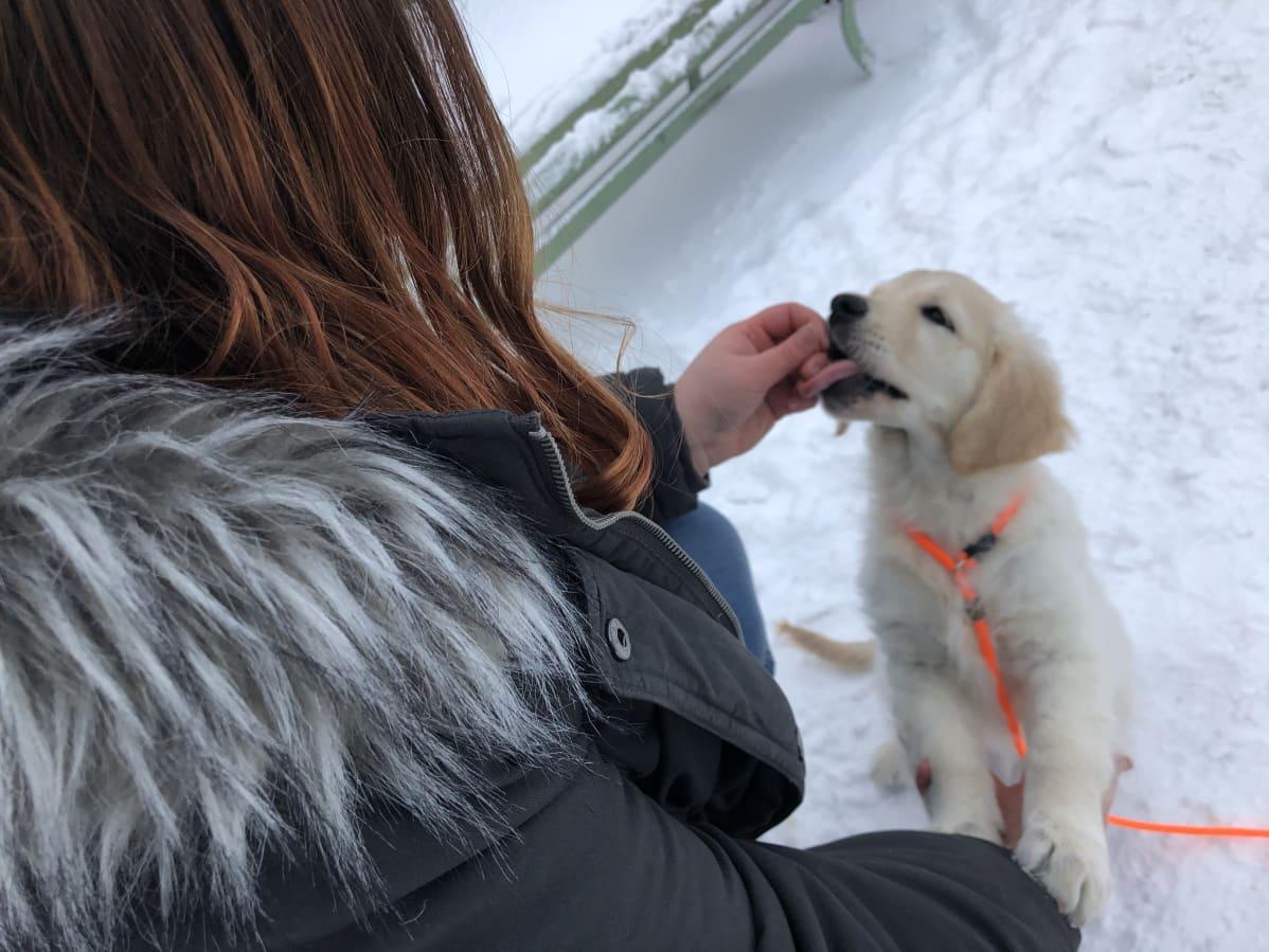 Koiranpennulle annetaan namupala ulkona lumisessa maisemassa.