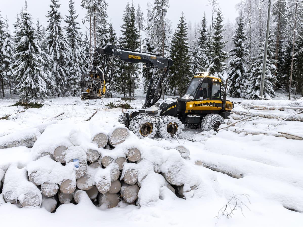 Metsäkone ajaa lumisen tukkipinon takana.