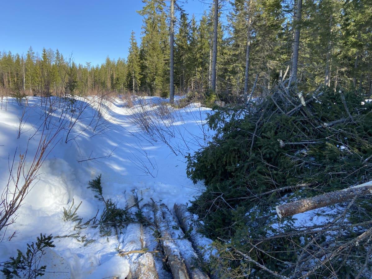 Metsäpalstojen välissä on kaivettu oja.
