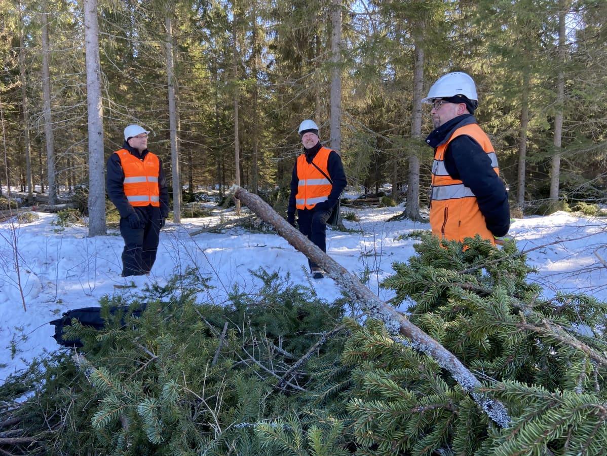 Kolme miestä seisoo metsän reunalla, metsästä on kaadettu puita.