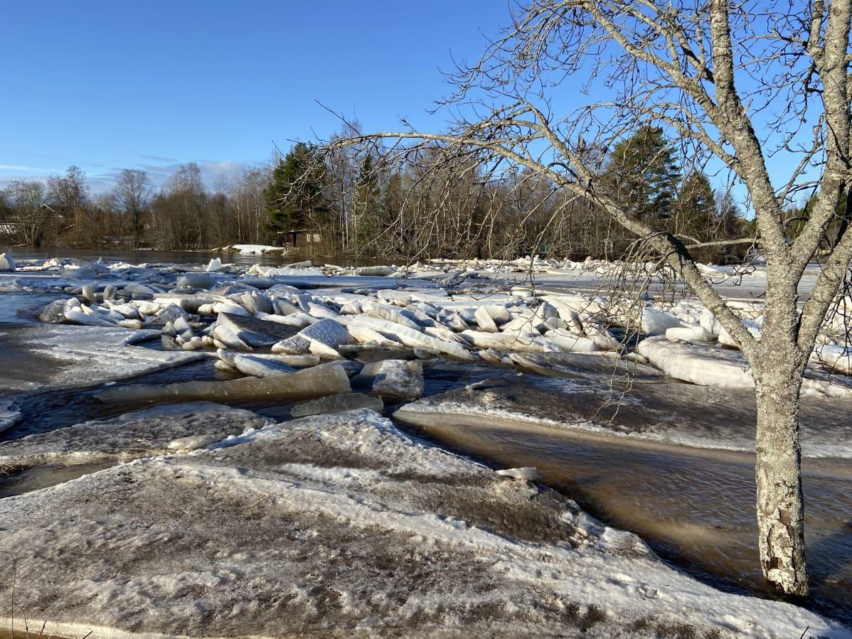 Kyrönjoen Perttilänkoskessa jäät ovat kasautuneet.
