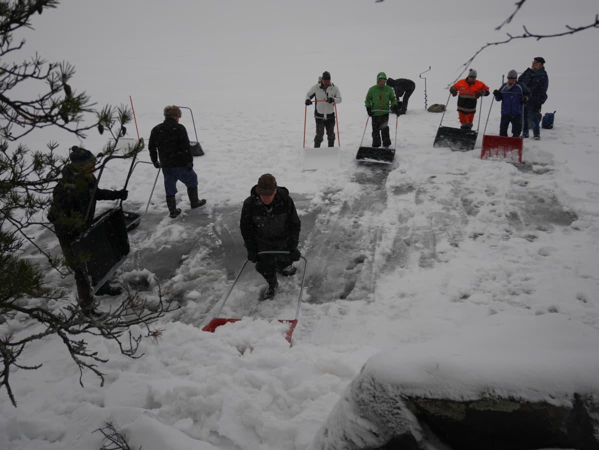 Ihmisiä kolaamassa lunta norpan pesätarpeiksi Saimaalla.