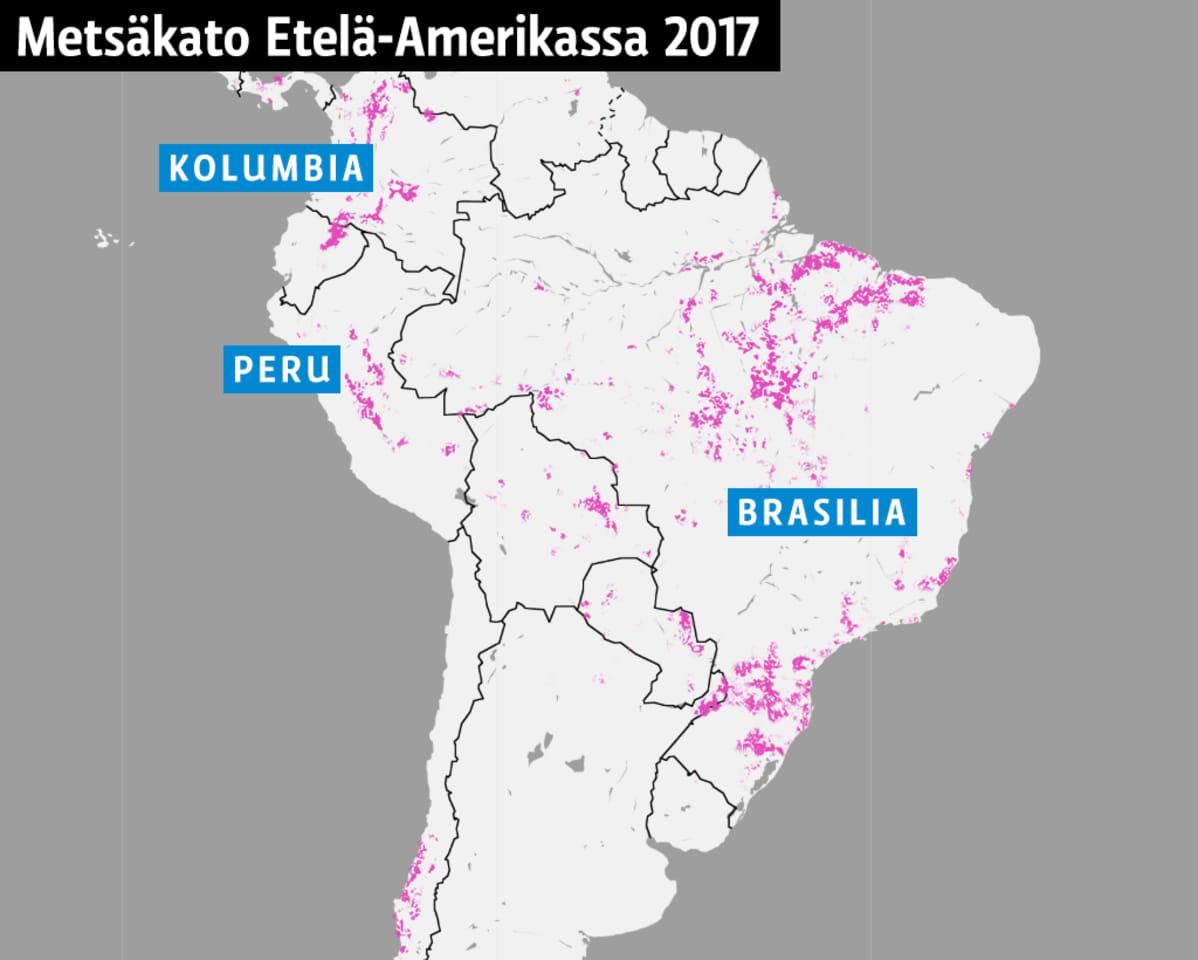 Metsäkato Etelä-Amerikassa
