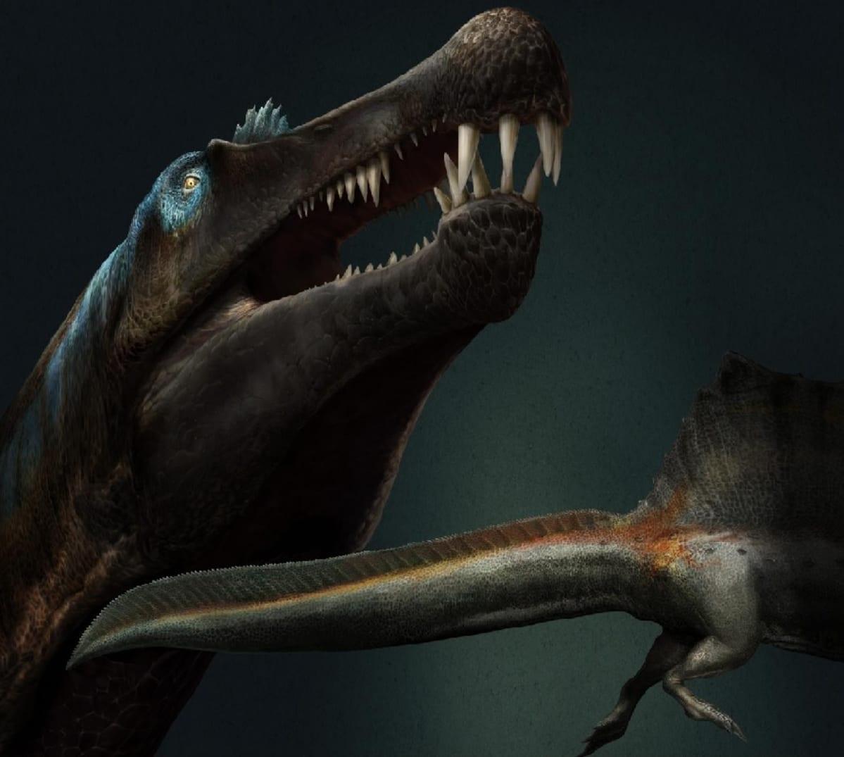 Piirroskuva dinosauruksen päästä kita avoinna sekä litteästä hännästä.