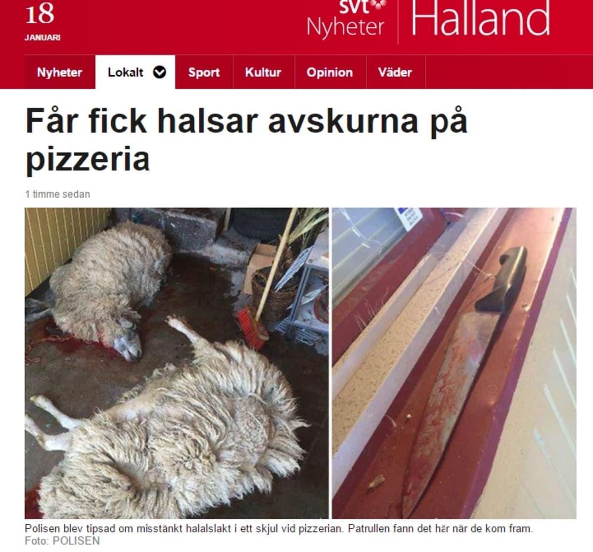 Poliisi löysi lampaat teurastettuina pizzerian vajasta Falkenbergissä kesäkuussa