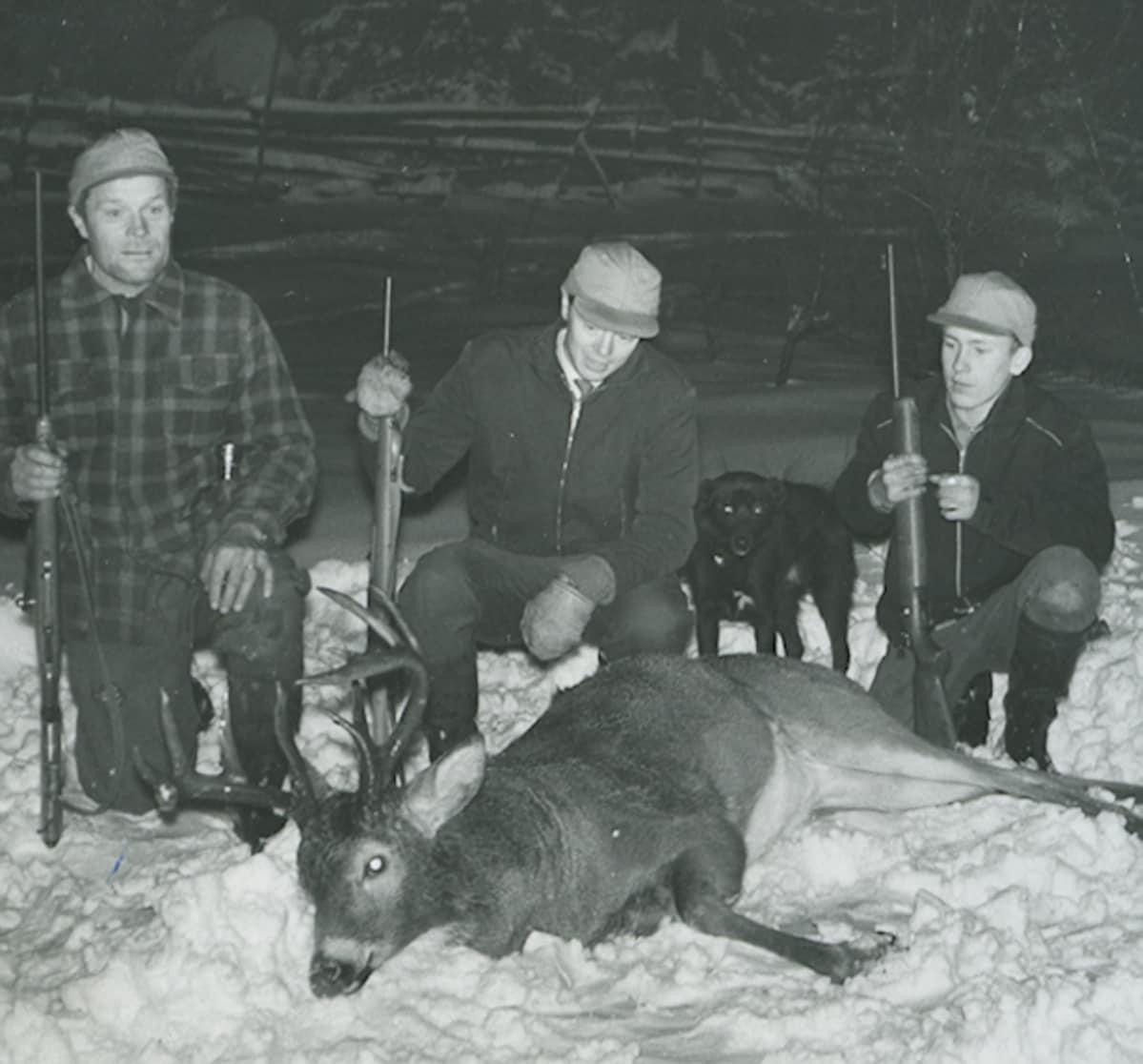 Ensimmäinen valkohäntäpeuran kaato Suomessa 24.11.1960