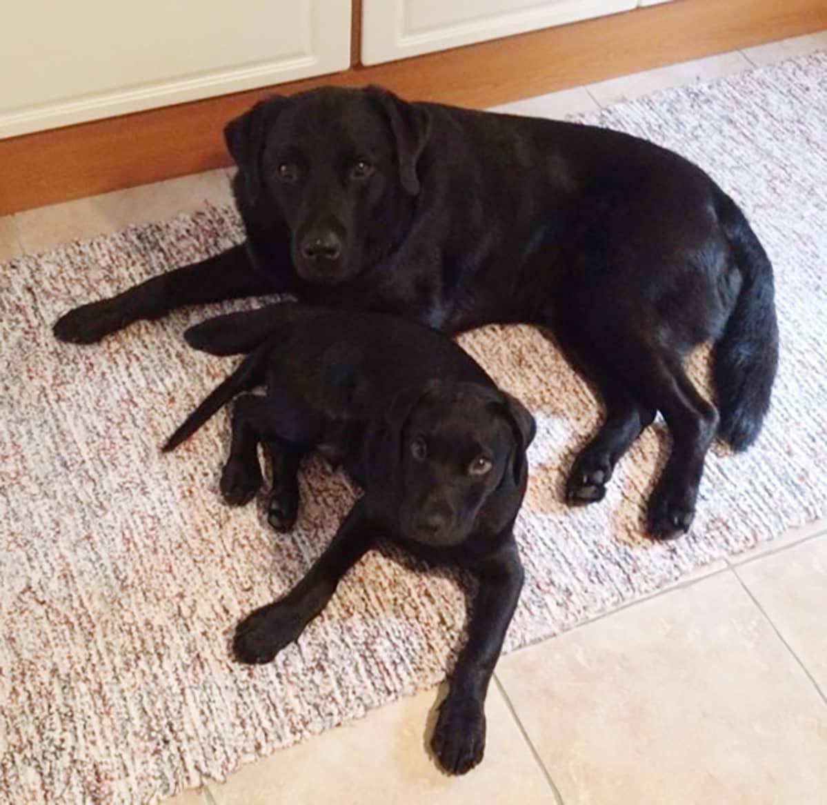 Into-koira ja Onni-koira