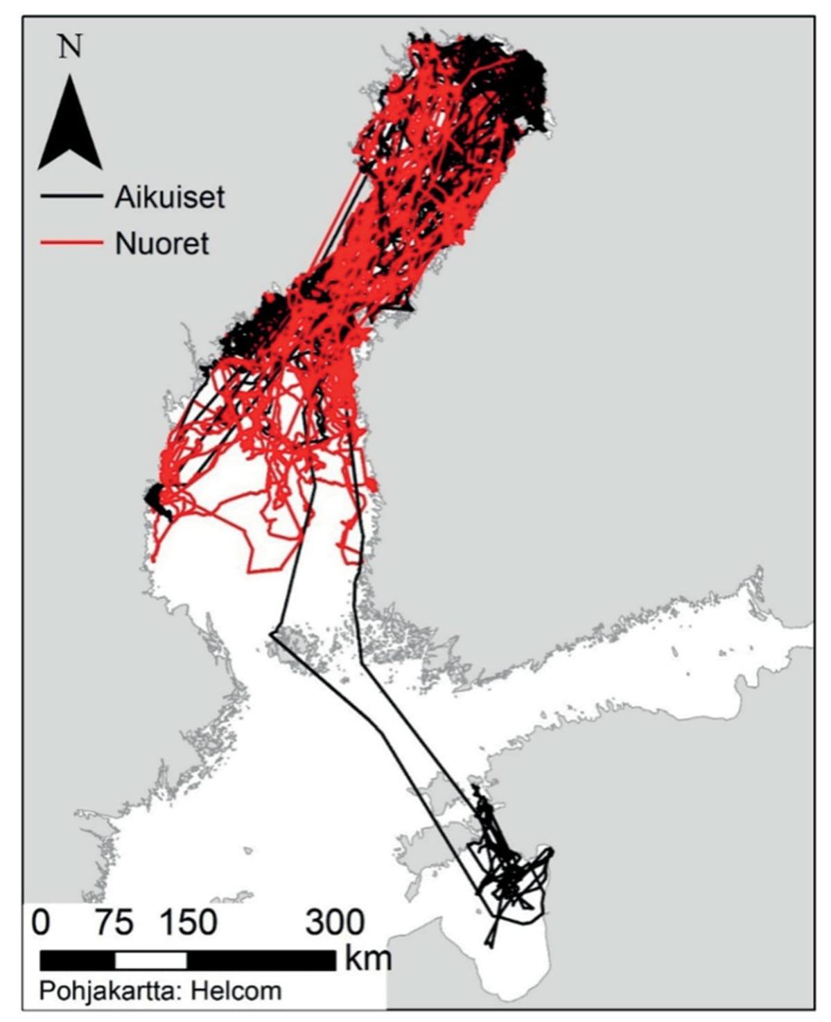 karttakuva norppien levinneisyydestä Suomen merialueilla