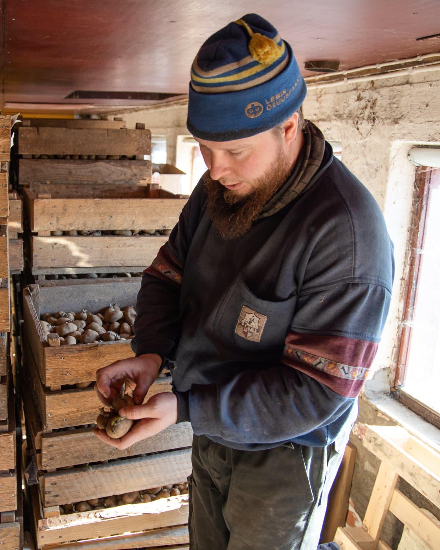 Siemenperunaa perunanviljelijä Sami Tapanaisen kädessä.