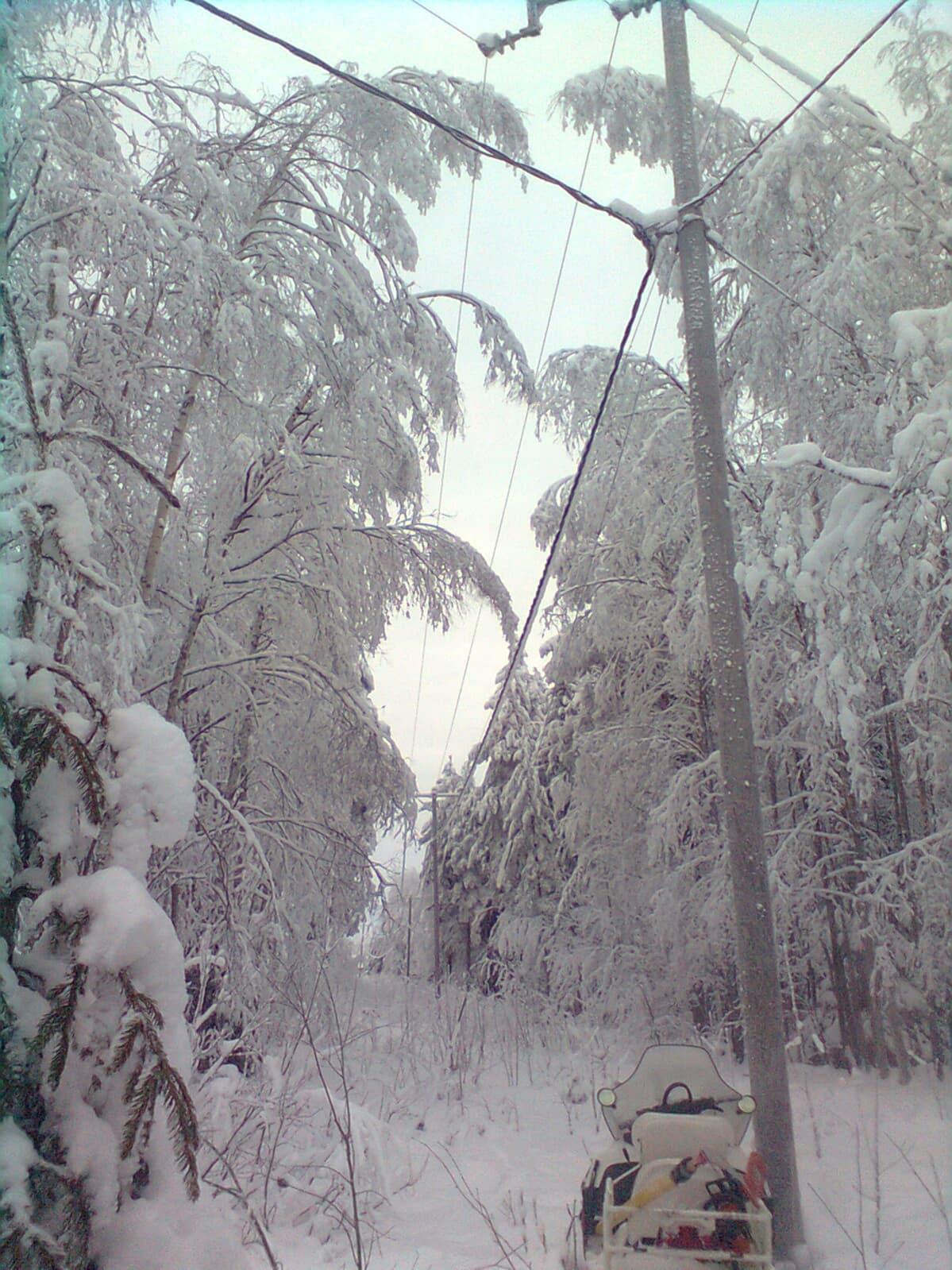 Kuuraiset puiden oksat kaartuvat sähköjohtojen päälle.