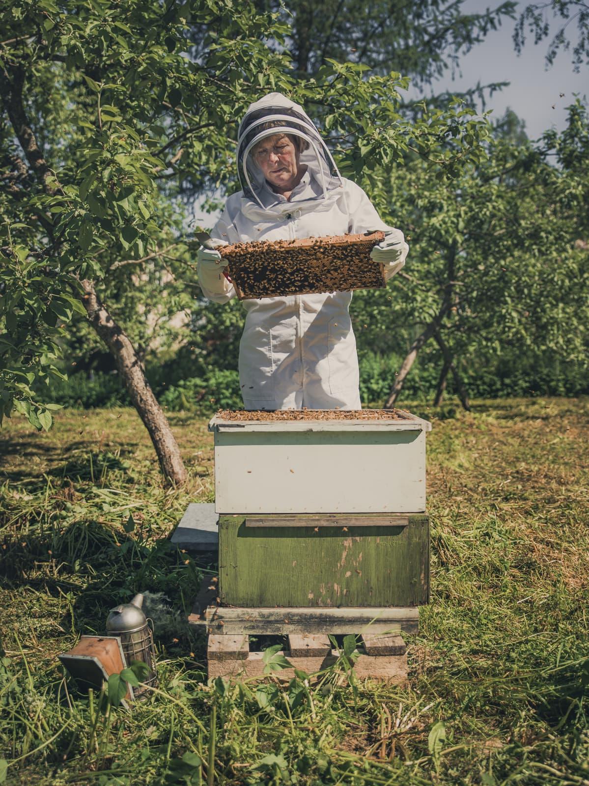Mehiläistarhaaja töissä