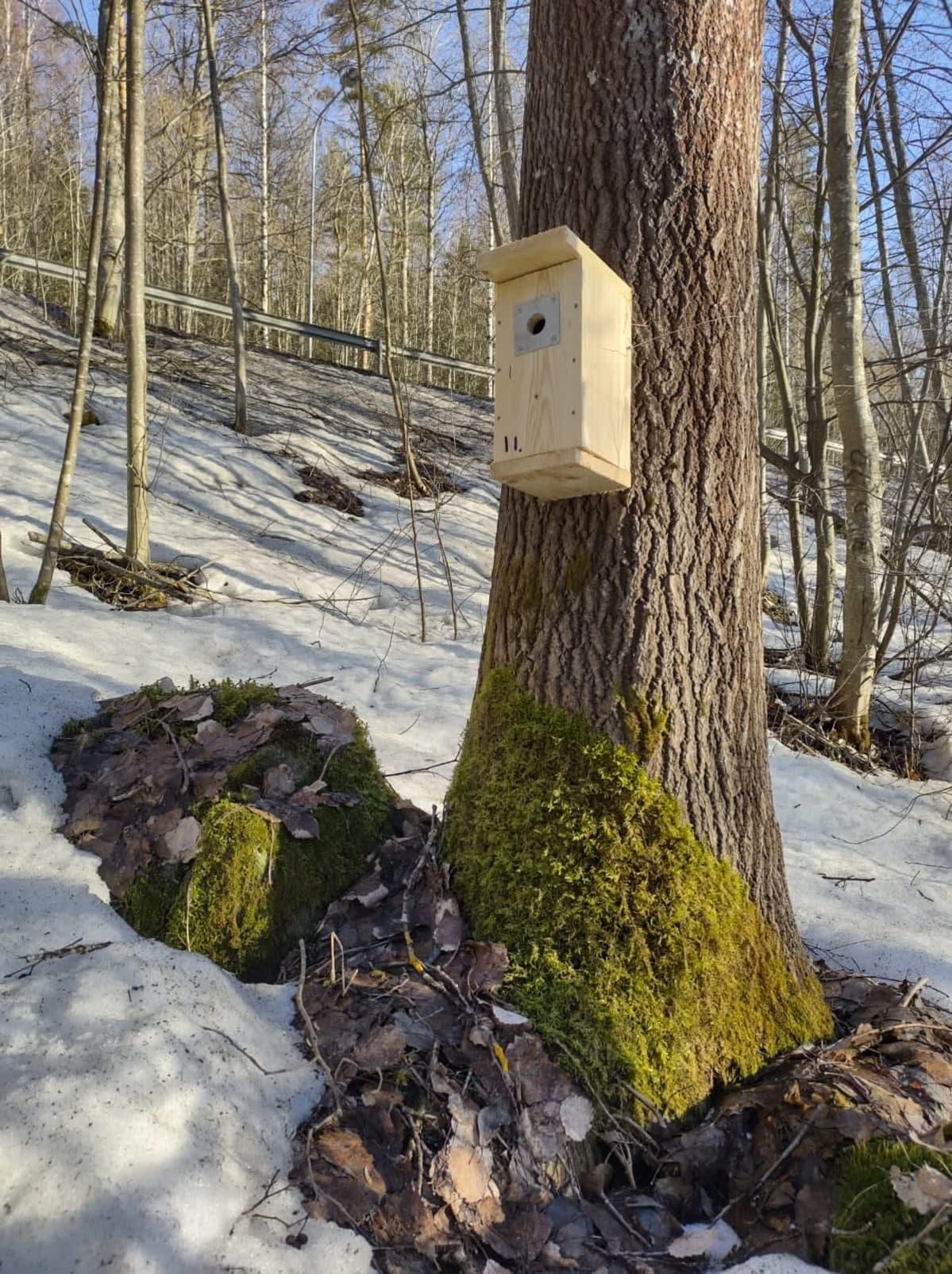 Linnunpönttö ripustettuna puuhun.