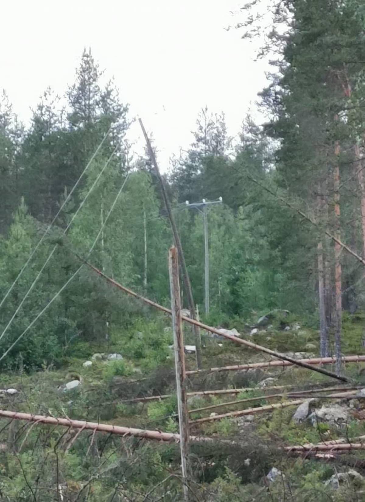 Sähkölinjalle kaatuneita puita.
