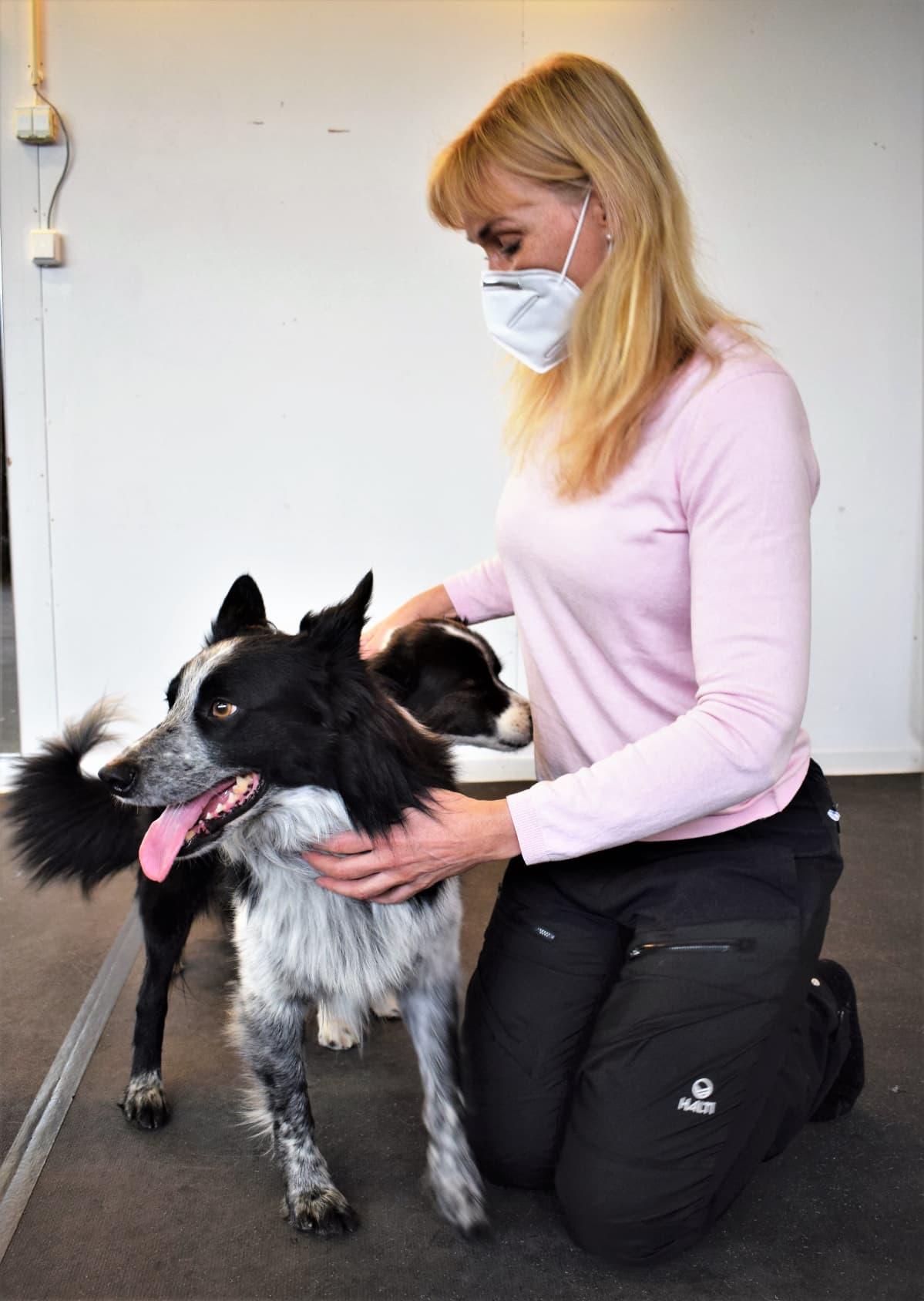 Koiranomi Paula Speer kahden bordercollie-koiransa kanssa.
