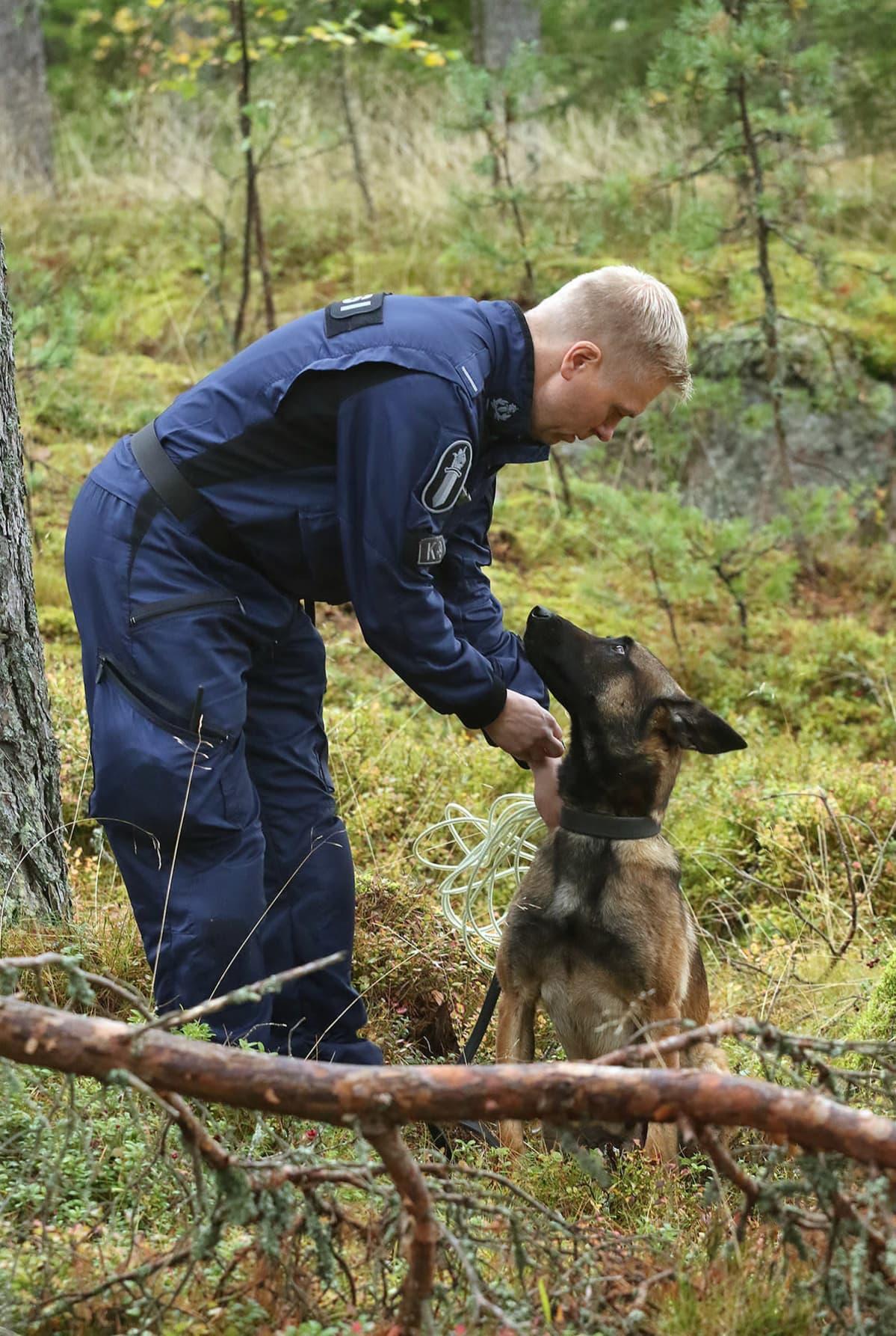 Belgianpaimenkoira malinois Viksu katsoo kuuliaisesti isäntäänsä, poliisi Toni Tarkiaista.
