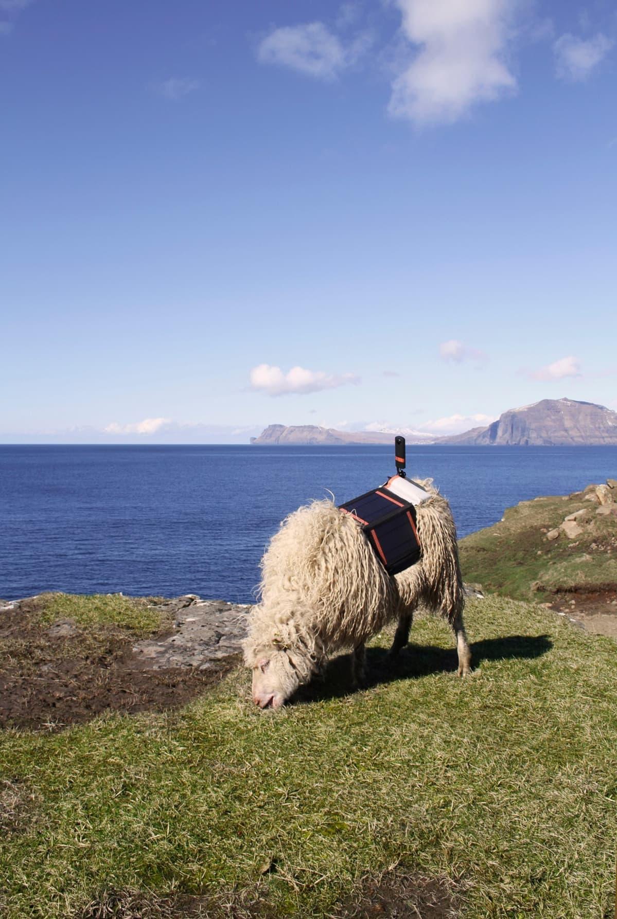 Lammas kamera selässään.