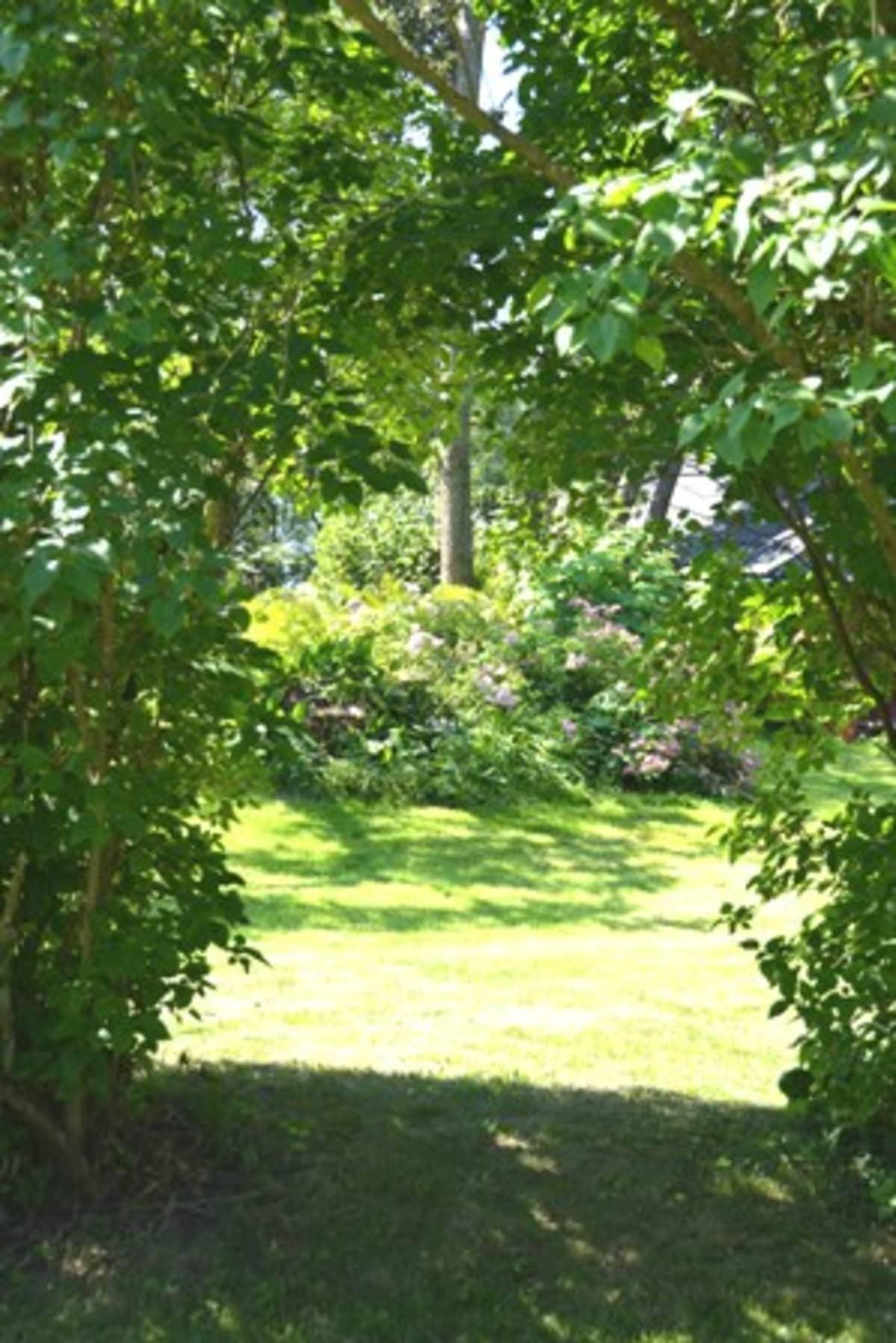 Kuvassa puita leikkaamalla saatu maisema.