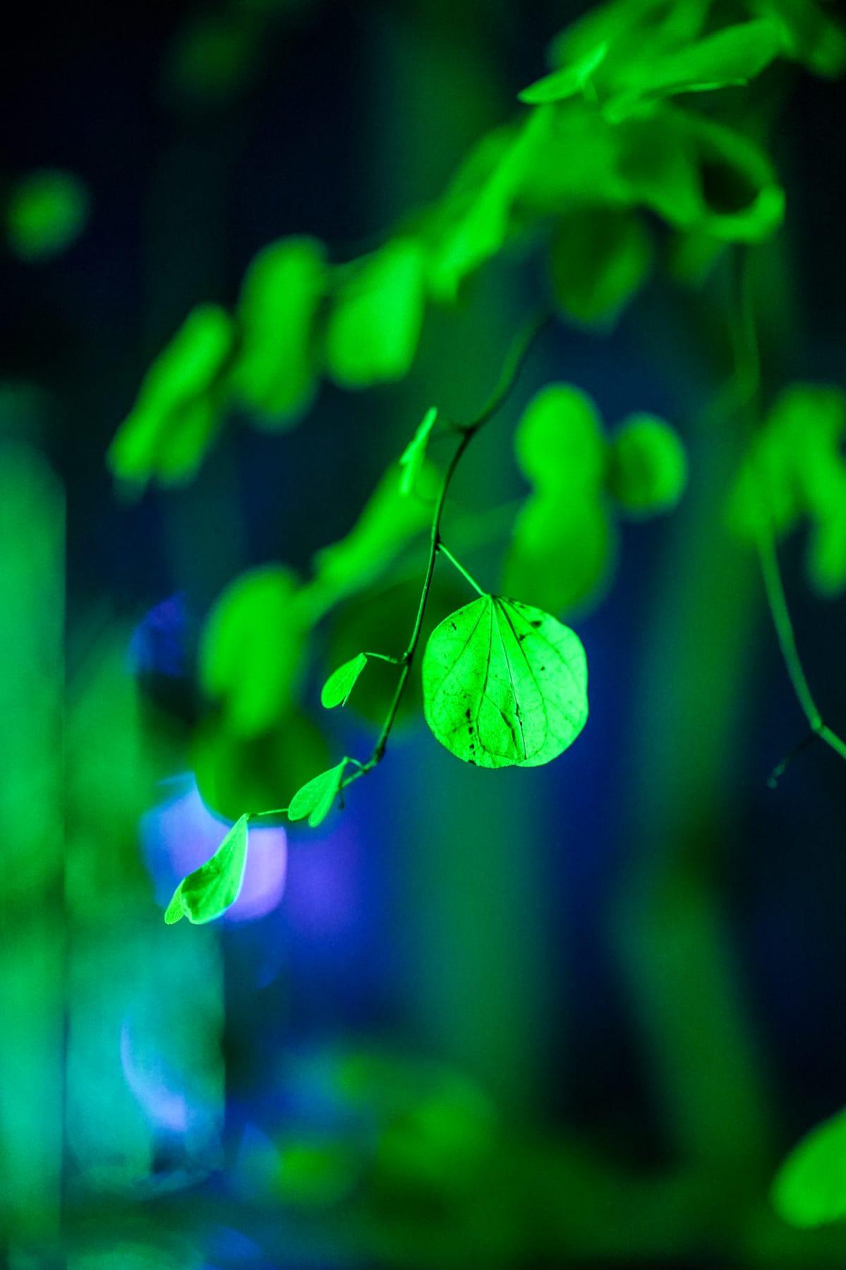 Music for Plants, Kasvitieteellinen puutarha
