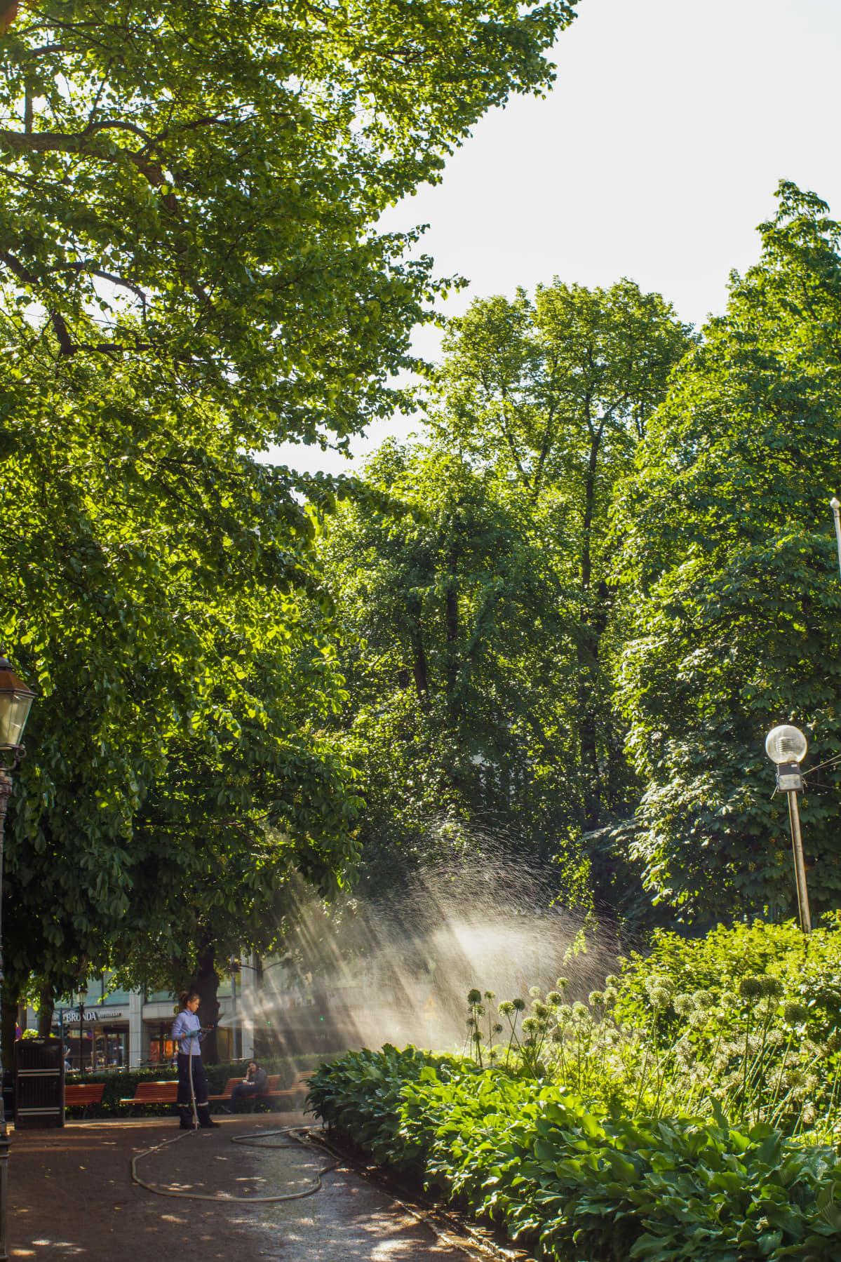 Parkarbetare som vattnar rabatter i Esplanadparken i Helsingfors.