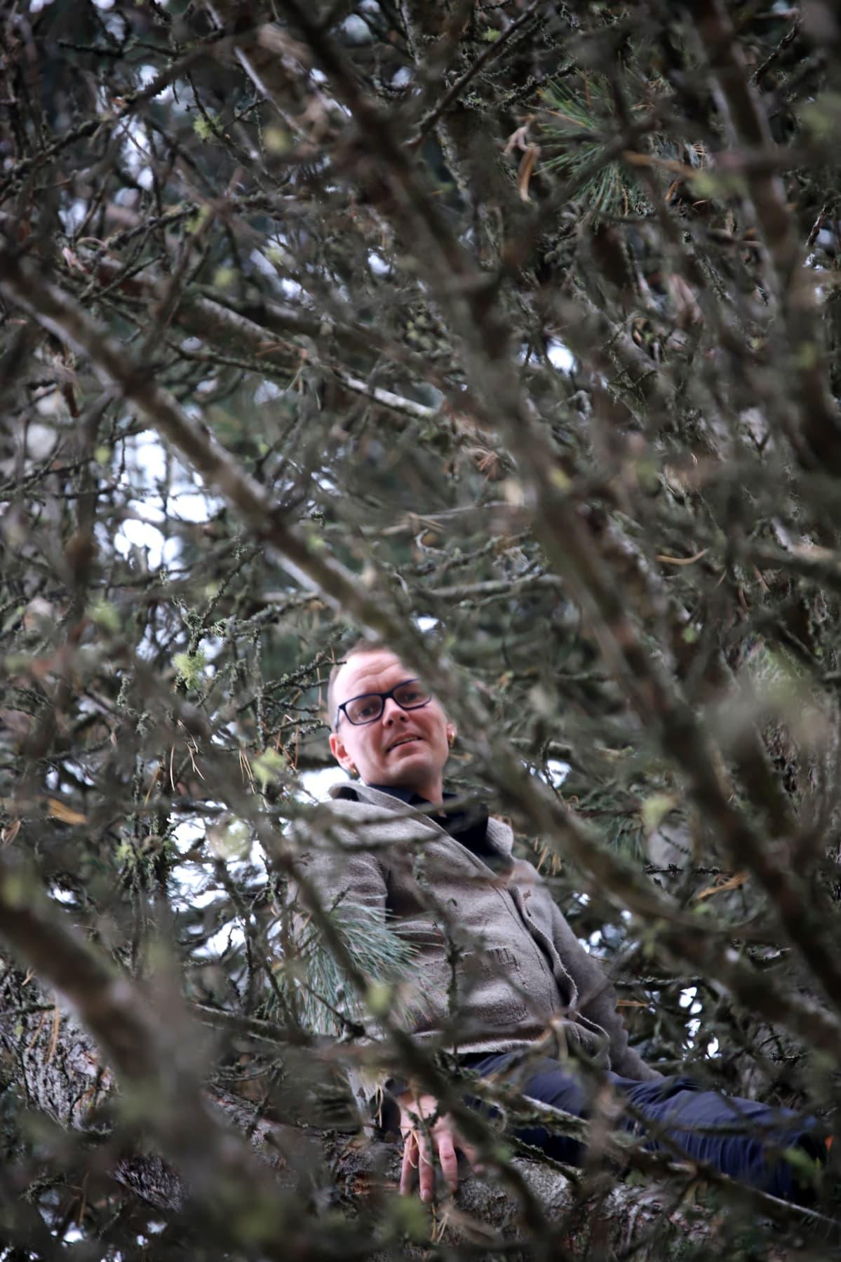 Antti Kairakari istuu puussa.