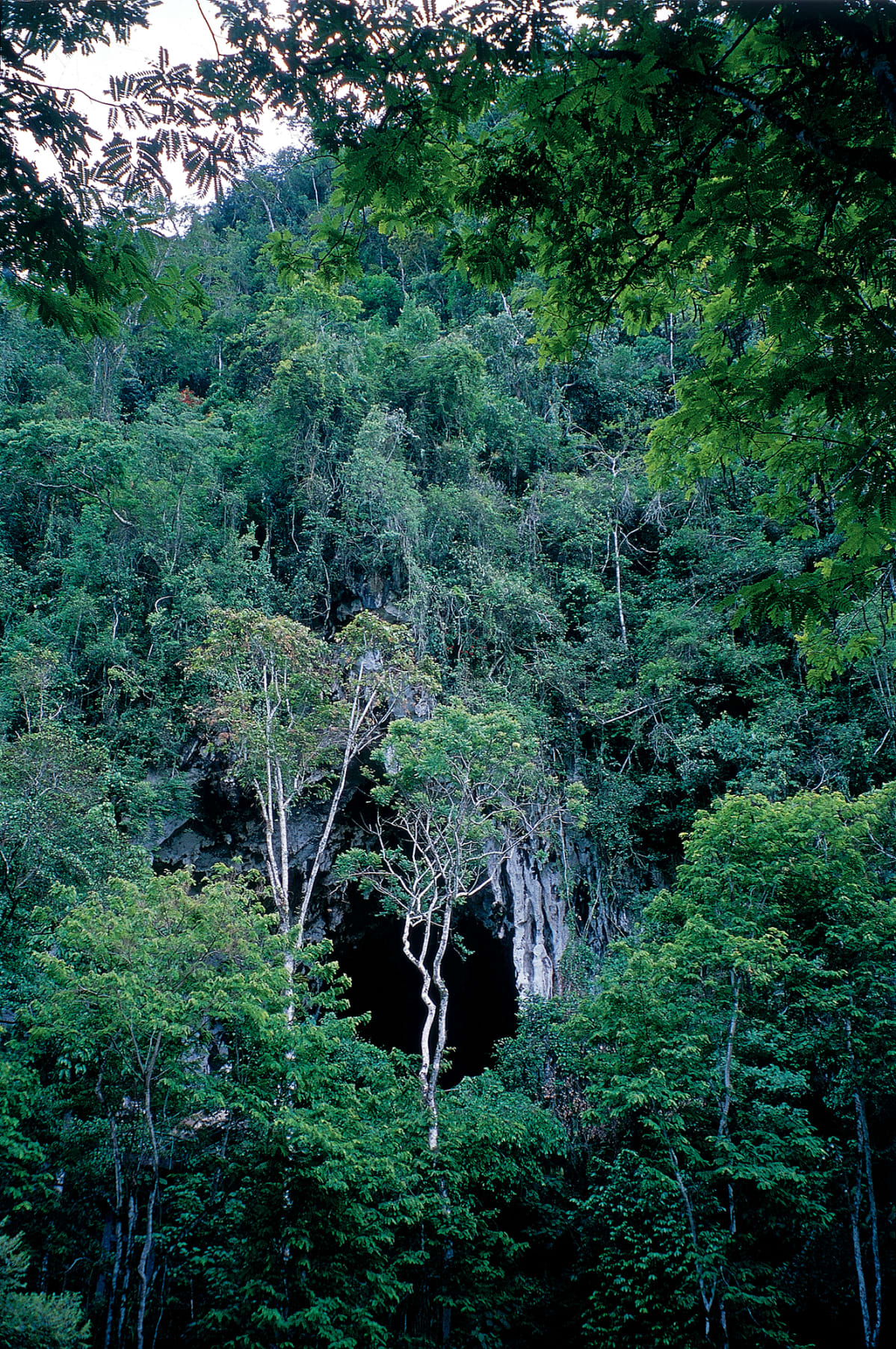 Luola sademetsässä.