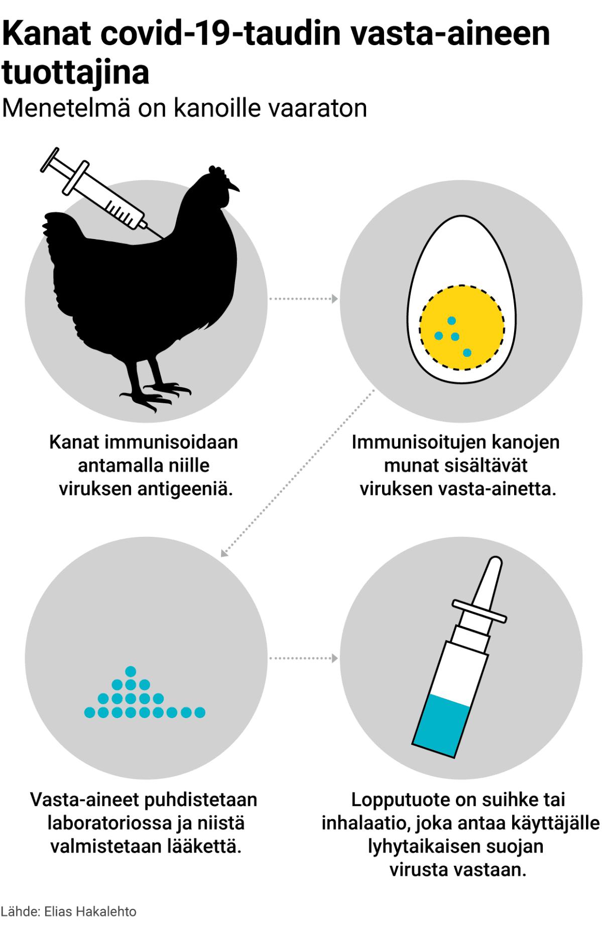Grafiikka kanojen hyödyntämisestä vasta-ainetuotannossa.