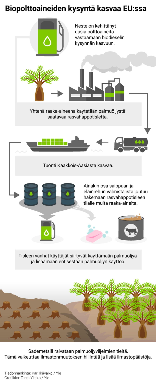 Biopolttoaineiden kysyntä kasvaa EU:ssa - grafiikka 1. Neste on kehittänyt uusia polttoaineita vastaamaan biodieselin kysynnnän kasvuun 2.Yhtenä raaka-aineena Neste käytää palmuöljy saatavaa rasvahappotislettä 3. Tuonti kaakkois-aasiasta kasvaa 4. Tisleen kysyntä pakottaa ainakin osaa vanhoista käyttäjistä hakemaan korvaavia raaka-aineita 5.Tisleen vanhat käyttäjät siirtyvät käyttämään palmuöljyä ja lisäämään entisestään palmuöljyn käyttöä 6. Sademetsiä raivataan palmuöljy viljelmien tieltä 7. Sadementsien raivaaminen vaikeuttaa ilmastonmuutoksen hillintää ja lisää  ilmastopäästöjä