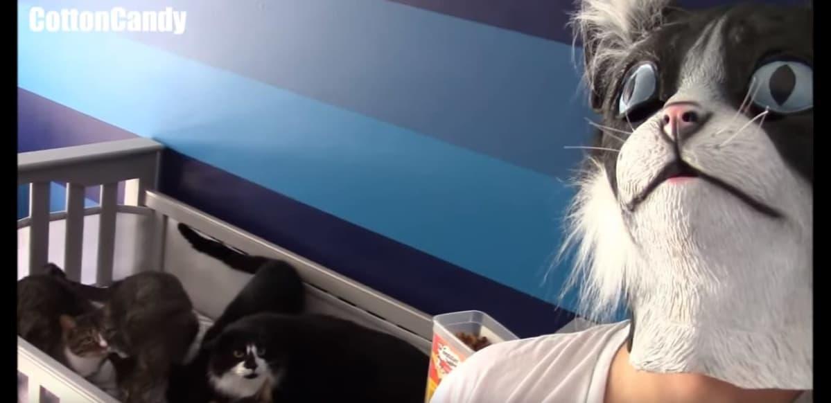 Kuvakaappaus Youtube-videosta: Ihmisellä on päässään kissaa esittävä naamari. Ihmisen takana on kissoja, jotka tuijottavat naamaria.