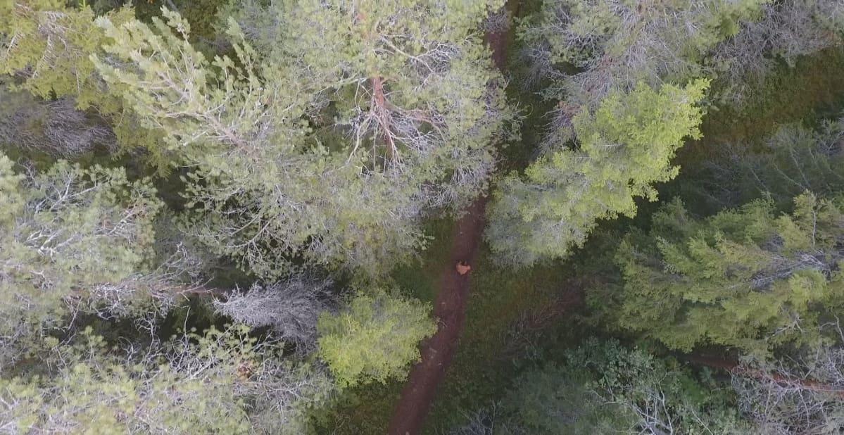 ilmakuva metsästä