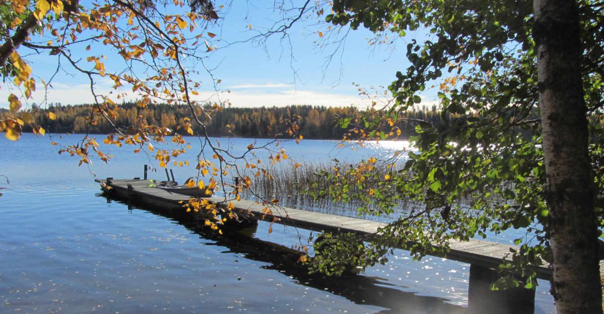 Syysaurinko paistaa kellastuvien koivujen reunustaman järven rannalla.