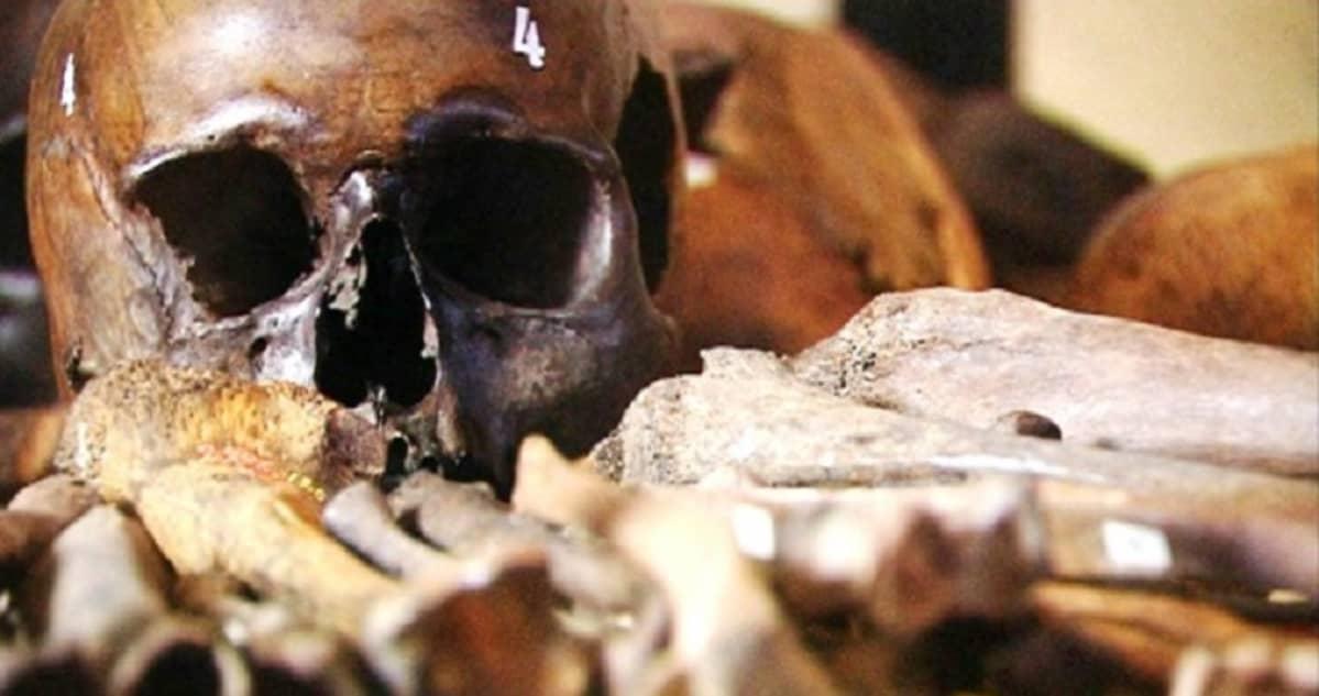 Levänluhdasta löytynyneitä kalloja ja luita