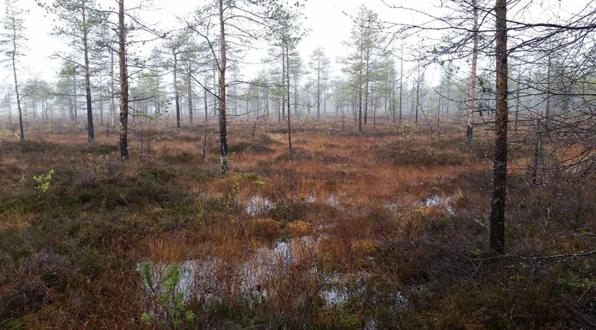 Syyspäivä Oulun Ylikiimingin Hirvisuolla 24.10.2015