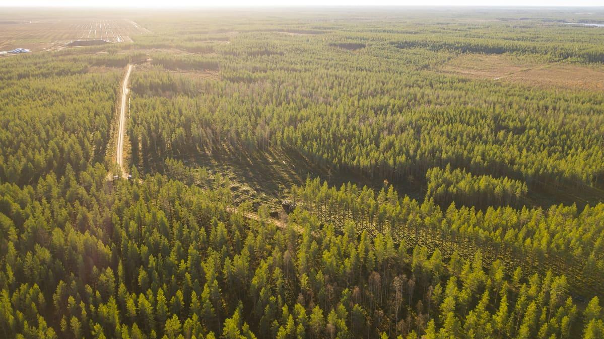 Metsää ilmakuvassa