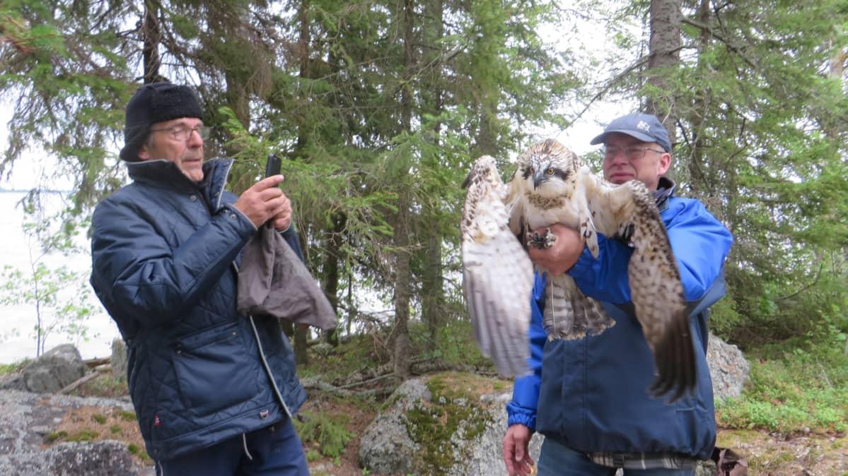 Tapio Osala ja Jorma Jäntti veivät kalasääksen takaisin luontoon.