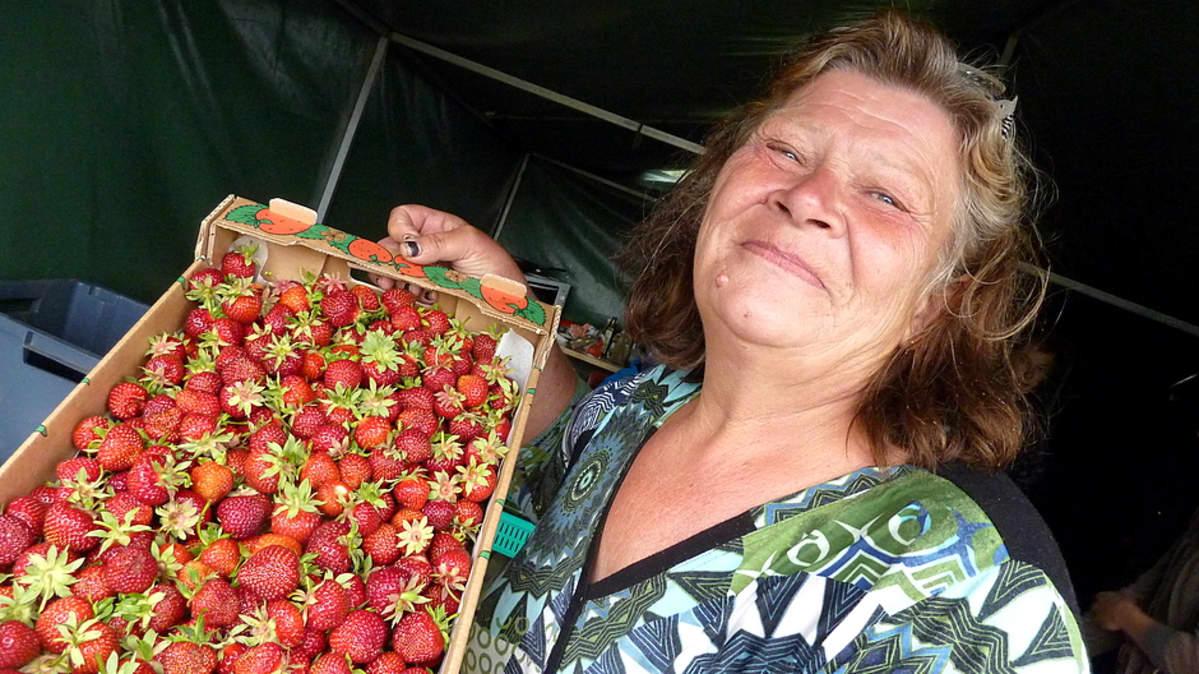 Ulla Lindroos esittelee ylpeänä luomumansikkasatoa