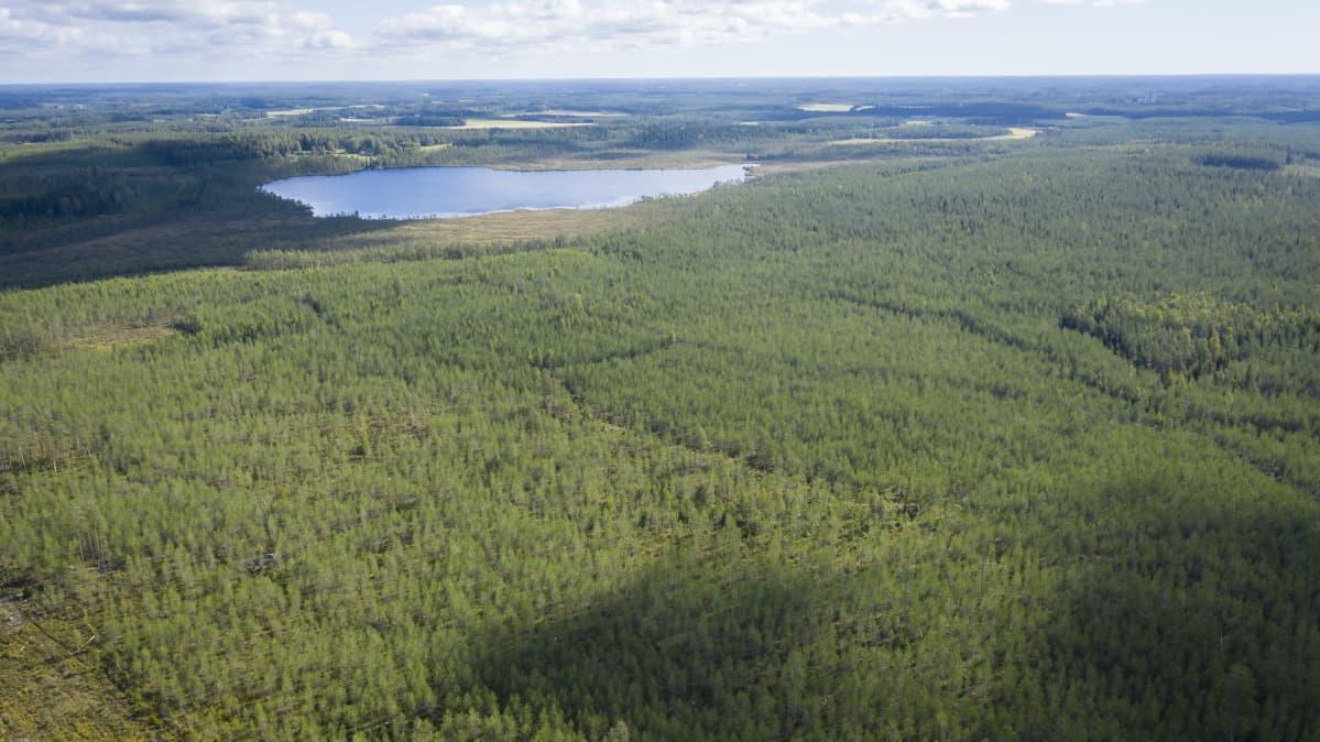 Korkealta ilmasta kuvattua metsäistä maisemaa, jossa näkyy yksi järvi.