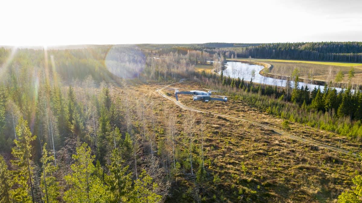 drone ilmassa maisema metsää ja taimi metsää
